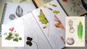 Atelier illustration botanique